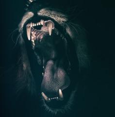lion-2885618_1920 (1)