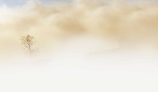 fog-240075_1920
